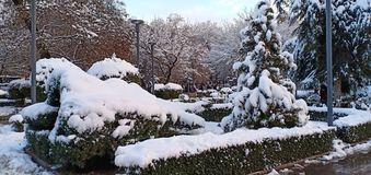 Verbazende sneeuw op bomen stock afbeelding