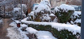 Verbazende sneeuw op bomen royalty-vrije stock foto
