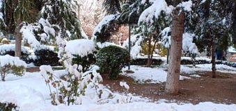 Verbazende sneeuw op bomen royalty-vrije stock fotografie