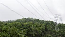 Verbazende wilde aardmening van diep altijdgroen boslandschap op zonlicht bij midden van de zomer Royalty-vrije Stock Afbeelding