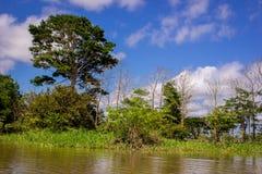 Verbazende wolken bij een rivier van de wildernisamazonië van regenwoudamazonië Stock Foto's
