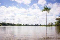 Verbazende wolken bij een rivier van de wildernisamazonië van regenwoudamazonië Royalty-vrije Stock Afbeelding