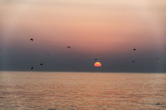 Verbazende Zonsondergang rode golven bij strand Salalah Oman stock fotografie