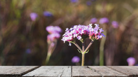 Verbena bonariensis flowers field & x28;blur image& x29; with selected foc Stock Image
