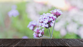 Verbena bonariensis flowers field & x28;blur image& x29; with selected foc Stock Images