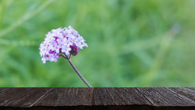 Verbena bonariensis flowers field & x28;blur image& x29; with selected foc Royalty Free Stock Images
