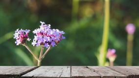 Verbena bonariensis flowers field & x28;blur image& x29; with selected foc Royalty Free Stock Photo