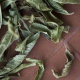 Verbena del limón foto de archivo libre de regalías