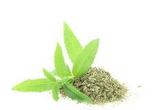 Verbena fresco e seco Foto de Stock