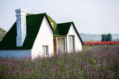 The little house on the verbena. Verbena little house on the green cabin Royalty Free Stock Photos