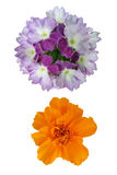 Verbena and marigold. Stock Photography