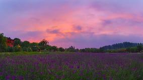 Verbena púrpura y cielo púrpura imagenes de archivo