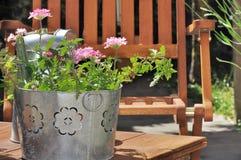 Verbena pot on a terrace Stock Photo
