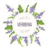 Verbena Round Circle badge. leaf branch, flowers and leaves. Vervain Herb template. for alternative medicine. Cosmetics, health care product, aromatherapy stock illustration