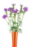 Verbena in a vase Royalty Free Stock Photo