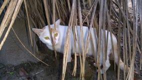 Verbergende Kat royalty-vrije stock foto