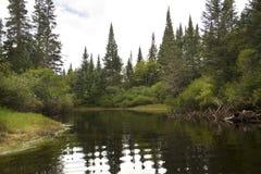 Verbiegen Sie in Elch-Fluss, mit geziertem Nordwald, Adirondack MoU Lizenzfreies Stockfoto