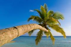 Verbiegende Palme auf tropischem Strand Stockbilder