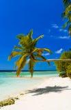 Verbiegende Palme auf tropischem Strand Lizenzfreie Stockbilder