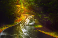 Verbiegende Straße im sonnigen Wald des Herbstes Stockfotografie