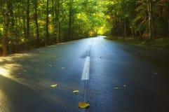 Verbiegende Straße im sonnigen Wald des Herbstes Stockfotos