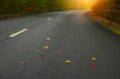 Verbiegende Straße im sonnigen Wald des Herbstes Lizenzfreie Stockfotografie