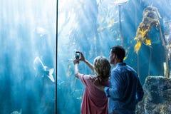 Verbinden Sie das Machen des Fotos der Fische im Behälter Stockbilder
