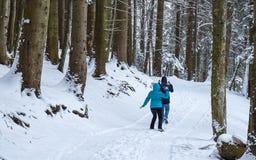 Verbinden Sie den Schneeball, der im Wald kämpft lizenzfreie stockfotografie