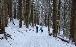 Verbinden Sie den Schneeball, der im Wald kämpft stockfoto