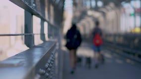 Verbinden Sie gehende Hunde über Sydneys Hafenbrücke stock footage
