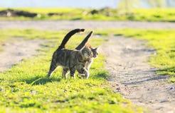 Verbinden Sie gehenden Arm des lustigen Kätzchens im Arm am saftigen grünen Gras lizenzfreies stockfoto