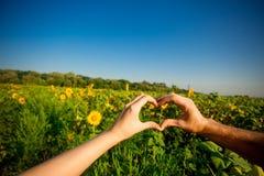 Verbinden Sie Hände in der Form des Herzens gegen Sonnenblumenlandschaft stockbilder