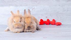Verbinden Sie kleine hellbraune Häschen auf grauem Hintergrund im Valentinsgrußthema mit Miniherzen hinter ihnen lizenzfreies stockfoto