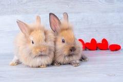 Verbinden Sie kleine hellbraune Häschen auf grauem Hintergrund im Valentinsgrußthema mit Miniherzen hinter ihnen stockfotografie