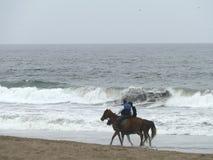 Verbinden Sie Reiter auf den braunen Pferden, die in Küste aus Lima trotten stockfoto