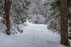 Verbinden Sie Skifahren im Wald bei Poiana Brasov, Siebenbürgen, Rumänien stockbilder
