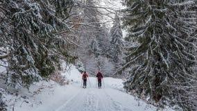 Verbinden Sie Skifahren im Wald bei Poiana Brasov, Siebenbürgen, Rumänien stockfoto