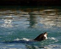 Verbinding in de handeling van het vangen van een vis voor diner royalty-vrije stock foto's
