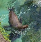 Verbinding die in een Pool zwemmen royalty-vrije stock afbeelding