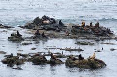 Verbinding en zeeleeuwen Stock Fotografie