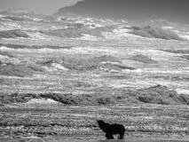 Verbinding in zwart-wit tegen de oceaan, Piha-Strand, Auckland, Nieuw Zeeland royalty-vrije stock afbeelding