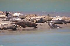 Verbindingen - het Strand van de Geitrots, Sonoma-Provincie, Californië Royalty-vrije Stock Foto