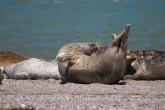 Verbindingen - het Strand van de Geitrots, Sonoma-Provincie, Californië Royalty-vrije Stock Fotografie