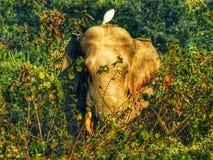 In Verbindung stehendes Foto der wild lebenden Tiere Freundschaft der wild lebenden Tiere Elefant und Vogel stockbilder