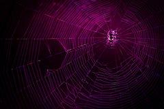 Verbindungskonzept des Spinnennetzes hintergrundbeleuchtet durch geführte Lichter stockbilder