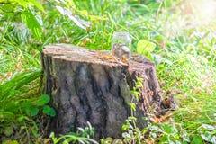 Verblüffen Sie im Wald, ein vor--duptout Wagen auf einem Stumpf, ein Begriffsfoto über Natur und Zivilisation stockbild