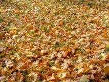 Verblaßte Blätter Stockfoto