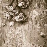 Verblaßte Rosen auf einem alten gemalten hölzernen Hintergrund Stockfotos