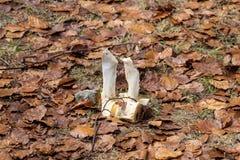 Verblaßter Knochen liegt im Herbstlaub Stockbild