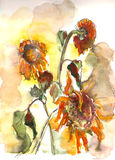 Verblassendes Sonnenblumenaquarell Lizenzfreie Stockbilder